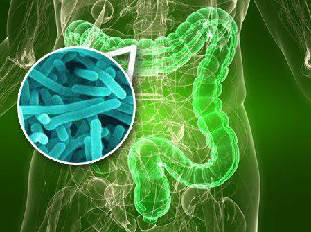 Bacterias del tracto intestinal podrían producir cólicos