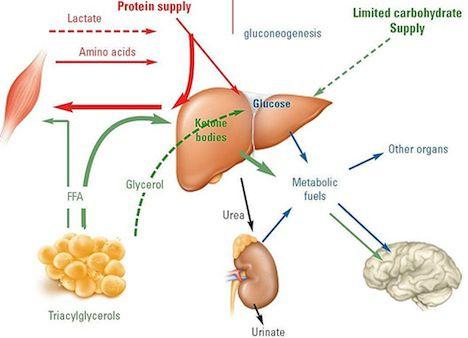 Dietas desequilibradas producen cetosis