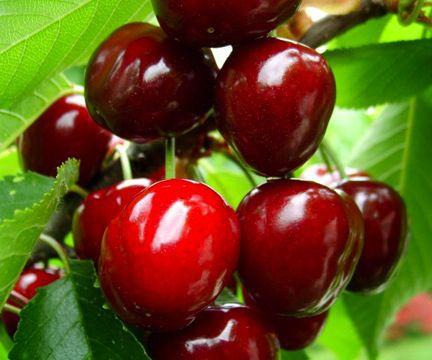 Es beneficioso para la salud comer cerezas