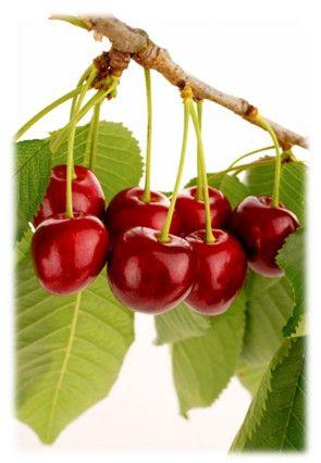 medicinas naturales contra la gota plantas medicinais para curar acido urico alimentos donde se encuentra acido urico